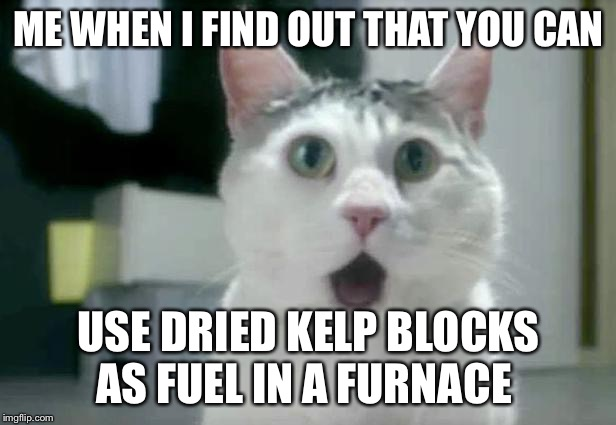 OMG Cat | ME WHEN I FIND OUT THAT YOU CAN USE DRIED KELP BLOCKS AS FUEL IN A FURNACE | image tagged in memes,omg cat | made w/ Imgflip meme maker