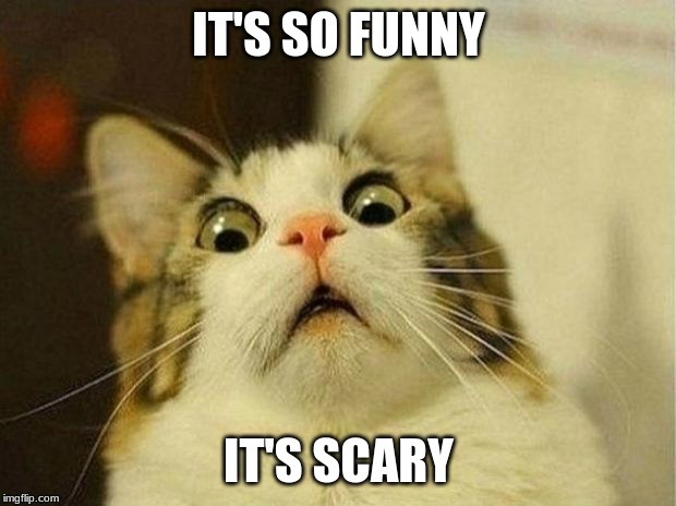 Too funny lolz |  IT'S SO FUNNY; IT'S SCARY | image tagged in memes,scared cat,it's scary,too funny | made w/ Imgflip meme maker