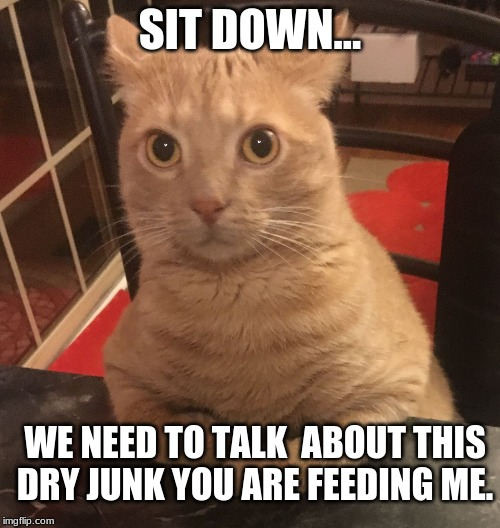 SIT DOWN... WE NEED TO TALK  ABOUT THIS DRY JUNK YOU ARE FEEDING ME. | image tagged in surprised cat sitting at a bar | made w/ Imgflip meme maker