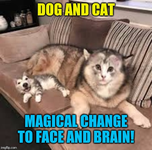 Cursed cat and dog! | DOG AND CAT MAGICAL CHANGE TO FACE AND BRAIN! | image tagged in wtf,funny,cats,dogs,nixieknox | made w/ Imgflip meme maker