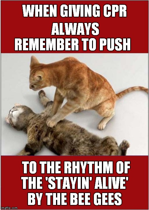 Cardio-Pulmonary Resuscitation Demo by Cats | WHEN GIVING CPR BY THE BEE GEES ALWAYS REMEMBER TO PUSH TO THE RHYTHM OF THE 'STAYIN' ALIVE' | image tagged in fun,medical,cats | made w/ Imgflip meme maker