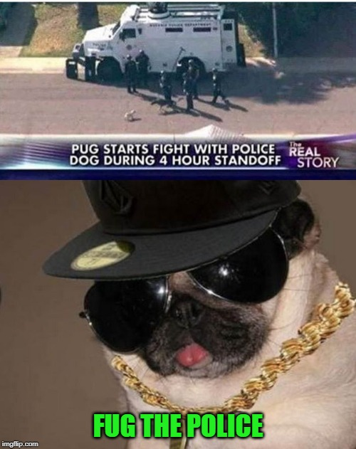 Don't Fug with the Pug! | FUG THE POLICE | image tagged in gangster pug,memes,police,funny,pug,dogs | made w/ Imgflip meme maker