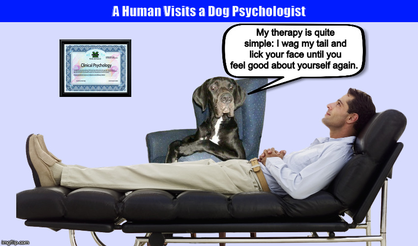 A Human Visits a Dog Psychologist | image tagged in dog,dogs,psychologist,psychiatrist,funny,memes | made w/ Imgflip meme maker