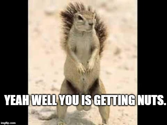 Squirrel nuts | YEAH WELL YOU IS GETTING NUTS. | image tagged in squirrel nuts | made w/ Imgflip meme maker
