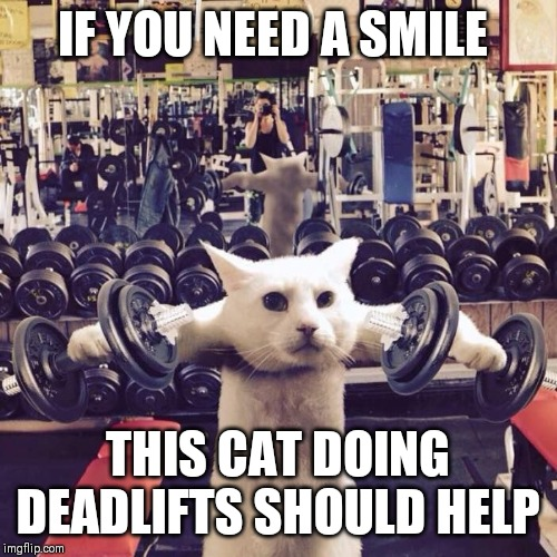 Gym Cat | IF YOU NEED A SMILE THIS CAT DOING DEADLIFTS SHOULD HELP | image tagged in gym cat | made w/ Imgflip meme maker