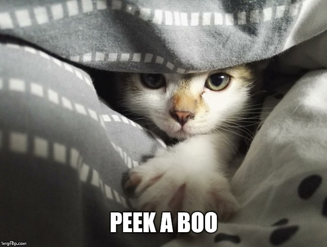 PEEK A BOO | image tagged in cats,cute cat | made w/ Imgflip meme maker