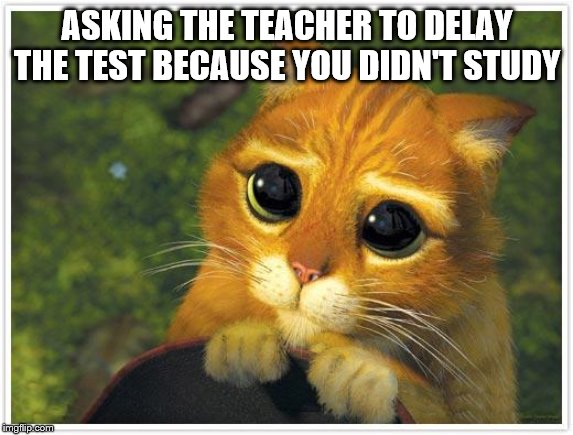 Shrek Cat | ASKING THE TEACHER TO DELAY THE TEST BECAUSE YOU DIDN'T STUDY | image tagged in memes,shrek cat | made w/ Imgflip meme maker