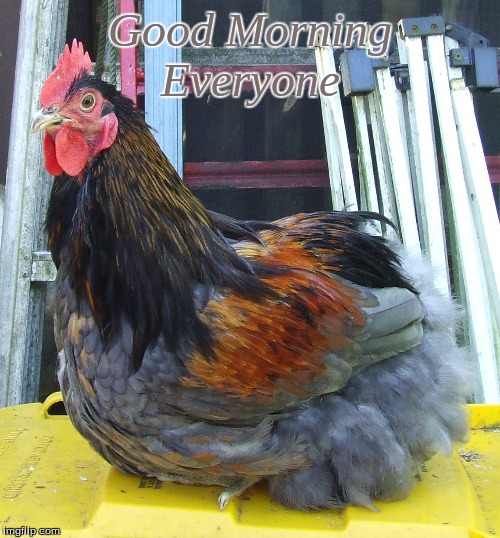 Good Morning Everyone |  Good Morning Everyone | image tagged in memes,good morning,good morning chickens,chickens,roosters | made w/ Imgflip meme maker