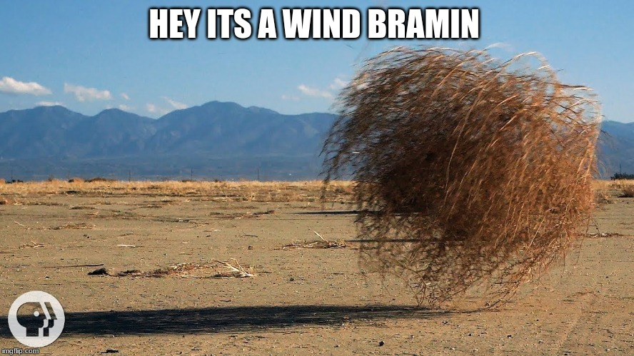 HEY ITS A WIND BRAMIN | image tagged in fallout new vegas | made w/ Imgflip meme maker