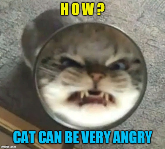 H O W ? CAT CAN BE VERY ANGRY | made w/ Imgflip meme maker