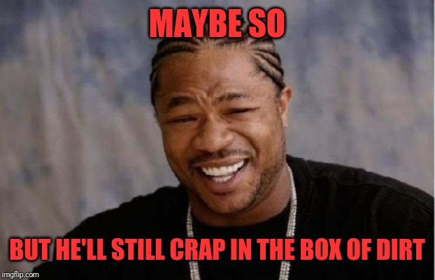 Yo Dawg Heard You Meme | MAYBE SO BUT HE'LL STILL CRAP IN THE BOX OF DIRT | image tagged in memes,yo dawg heard you | made w/ Imgflip meme maker