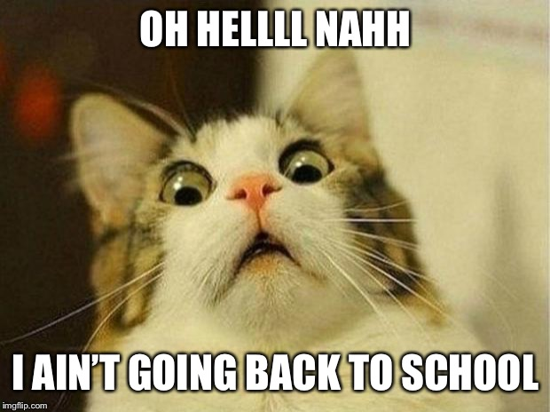 Scared Cat Meme | OH HELLLL NAHH I AIN'T GOING BACK TO SCHOOL | image tagged in memes,scared cat | made w/ Imgflip meme maker