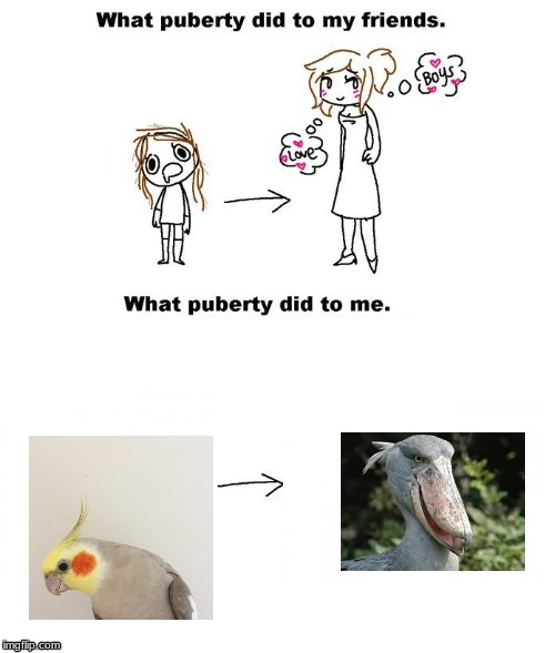 What puberty did to me  | image tagged in what puberty did to me | made w/ Imgflip meme maker