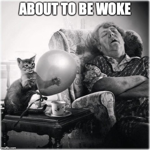 Don't Forget To Feed The Cat | ABOUT TO BE WOKE | image tagged in funny cats,balloon,woke | made w/ Imgflip meme maker