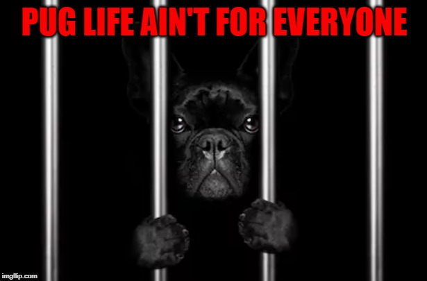 PUG LIFE AIN'T FOR EVERYONE | made w/ Imgflip meme maker