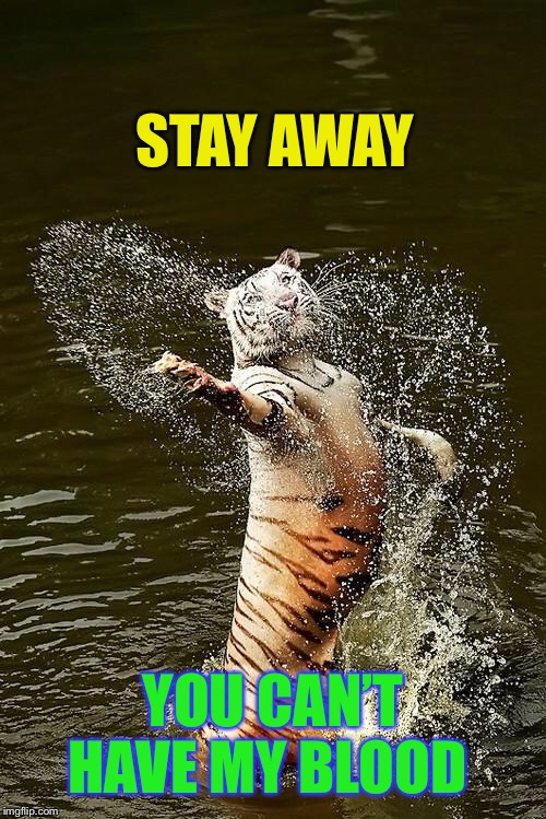Fabulous Tiger | STAY AWAY YOU CAN'T HAVE MY BLOOD | image tagged in fabulous tiger | made w/ Imgflip meme maker