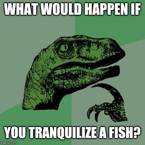 Is it even possible? | WHAT WOULD HAPPEN IF YOU TRANQUILIZE A FISH? | image tagged in memes,philosoraptor,tranquilizers,fish | made w/ Imgflip meme maker