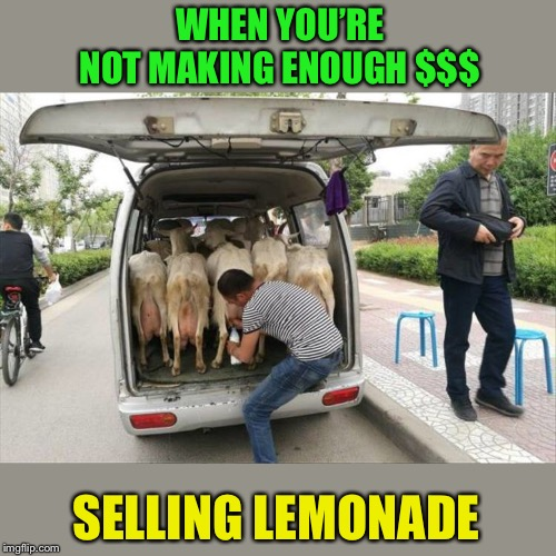 Sometimes ya gotta diversify. | WHEN YOU'RE NOT MAKING ENOUGH $$$ SELLING LEMONADE | image tagged in lemonade,goats,memes,funny | made w/ Imgflip meme maker