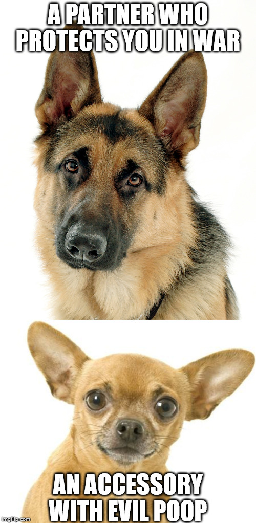 i like a dog that can protect the house and look cute at the same time. | A PARTNER WHO PROTECTS YOU IN WAR AN ACCESSORY WITH EVIL POOP | image tagged in german shepherd,chihuahua,large dog,toy dog | made w/ Imgflip meme maker