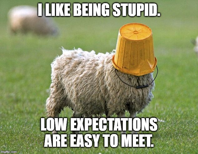 stupid sheep | I LIKE BEING STUPID. LOW EXPECTATIONS ARE EASY TO MEET. | image tagged in stupid sheep | made w/ Imgflip meme maker