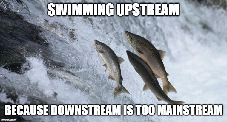salmon fish | SWIMMING UPSTREAM BECAUSE DOWNSTREAM IS TOO MAINSTREAM | image tagged in salmon fish | made w/ Imgflip meme maker