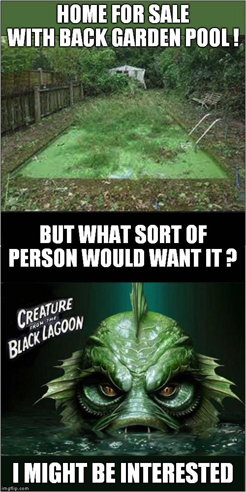 Nice Pool but a Bit Cloudy | HOME FOR SALE WITH BACK GARDEN POOL ! I MIGHT BE INTERESTED BUT WHAT SORT OF PERSON WOULD WANT IT ? | image tagged in fun,creature from black lagoon | made w/ Imgflip meme maker
