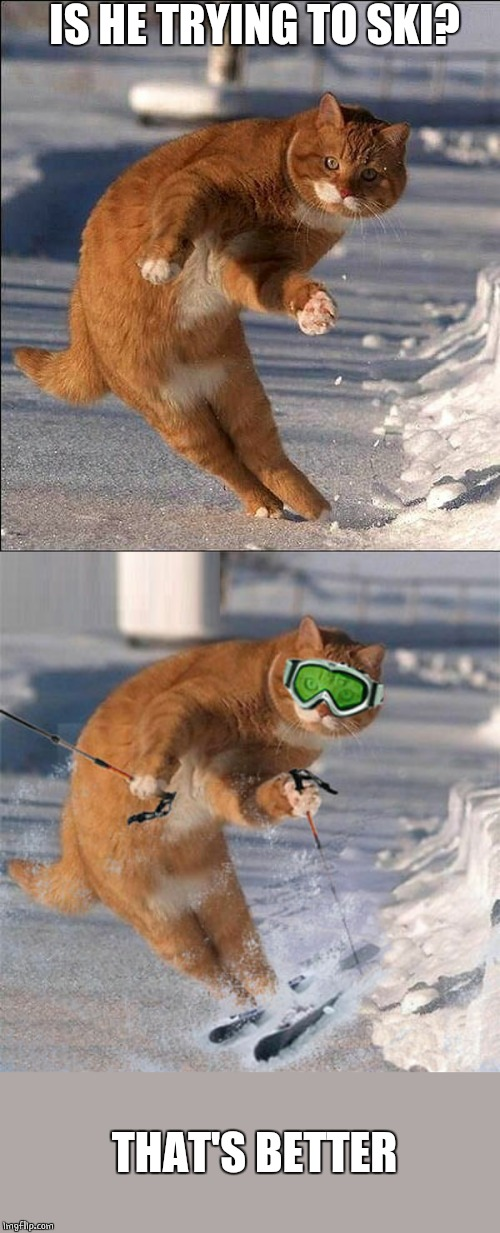 SKI CAT | IS HE TRYING TO SKI? THAT'S BETTER | image tagged in cats,funny cats,cat,skiing | made w/ Imgflip meme maker