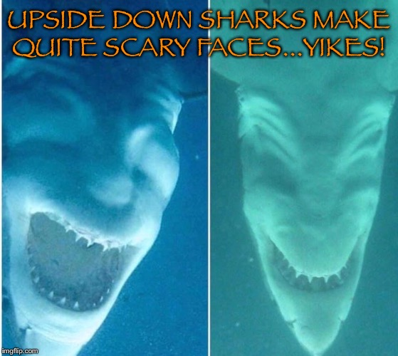 UPSIDE DOWN SHARKS MAKE QUITE SCARY FACES...YIKES! | image tagged in sharks | made w/ Imgflip meme maker