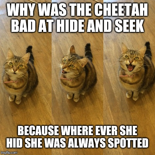 Bad Pun Cat | WHY WAS THE CHEETAH BAD AT HIDE AND SEEK BECAUSE WHERE EVER SHE HID SHE WAS ALWAYS SPOTTED | image tagged in bad pun cat | made w/ Imgflip meme maker