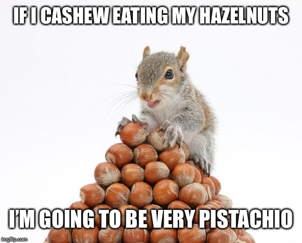 Squirrel pun |  IF I CASHEW EATING MY HAZELNUTS; I'M GOING TO BE VERY PISTACHIO | image tagged in squirrel nuts,puns,memes | made w/ Imgflip meme maker