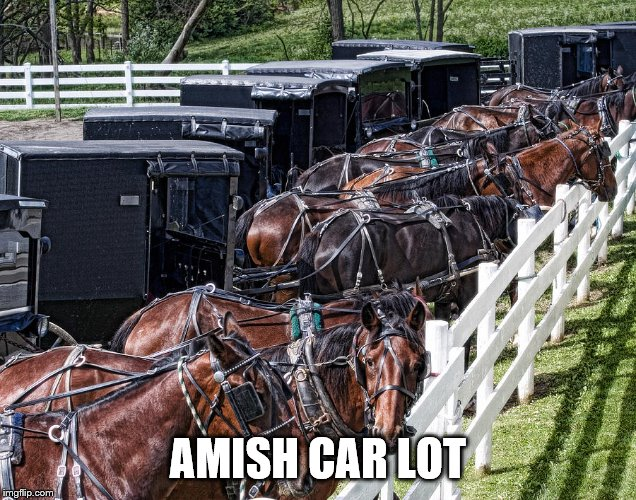 Still some time left for my Amish Week. 9-2 to 9-9 | AMISH CAR LOT | image tagged in amish,theme week,horses | made w/ Imgflip meme maker