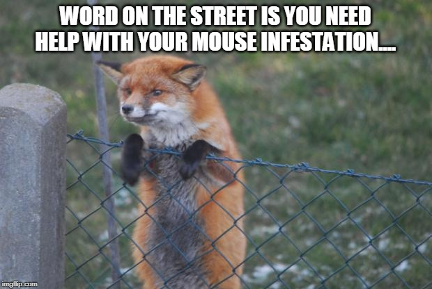 Fox Pest Control | WORD ON THE STREET IS YOU NEED HELP WITH YOUR MOUSE INFESTATION.... | image tagged in fox wanna buy,fox,jokes,mouse,predator | made w/ Imgflip meme maker