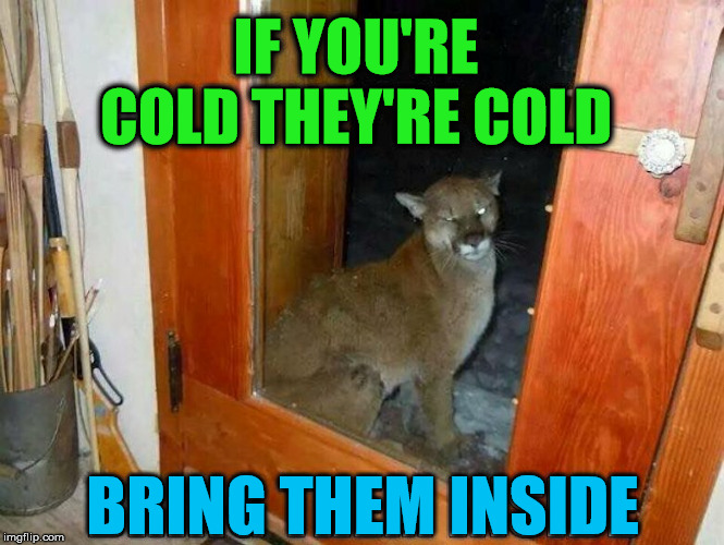 Remember this coming winter... | IF YOU'RECOLD THEY'RE COLD BRING THEM INSIDE | image tagged in cats,inside | made w/ Imgflip meme maker
