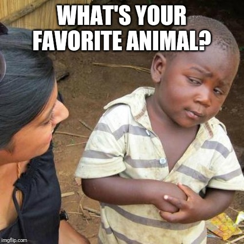Third World Skeptical Kid | WHAT'S YOUR FAVORITE ANIMAL? | image tagged in memes,third world skeptical kid | made w/ Imgflip meme maker