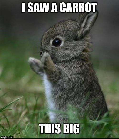 Cute Bunny | I SAW A CARROT THIS BIG | image tagged in cute bunny | made w/ Imgflip meme maker