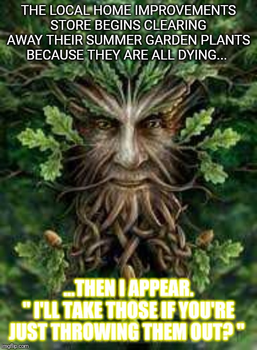 "Green man | THE LOCAL HOME IMPROVEMENTS STORE BEGINS CLEARING AWAY THEIR SUMMER GARDEN PLANTS BECAUSE THEY ARE ALL DYING... ...THEN I APPEAR. "" I'LL TAK 