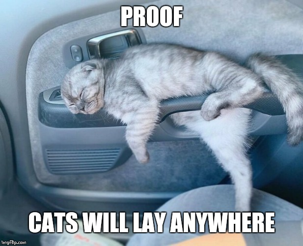 CAR CAT | PROOF CATS WILL LAY ANYWHERE | image tagged in cats,funny cats | made w/ Imgflip meme maker