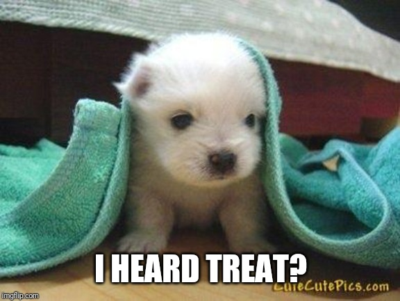 Cute puppy | I HEARD TREAT? | image tagged in cute puppy | made w/ Imgflip meme maker