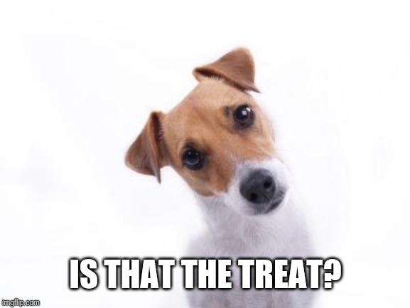 Confused Dog | IS THAT THE TREAT? | image tagged in confused dog | made w/ Imgflip meme maker