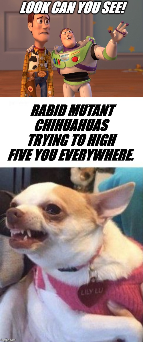 Does anyone know who wrote the words to this meme? | RABID MUTANT CHIHUAHUAS TRYING TO HIGH FIVE YOU EVERYWHERE. LOOK CAN YOU SEE! | image tagged in angry chihuahua happy chihuahua,memes,x x everywhere | made w/ Imgflip meme maker