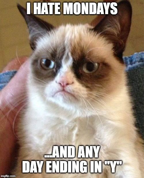 "Grumpy Cat Meme | I HATE MONDAYS ...AND ANY DAY ENDING IN ""Y"" 