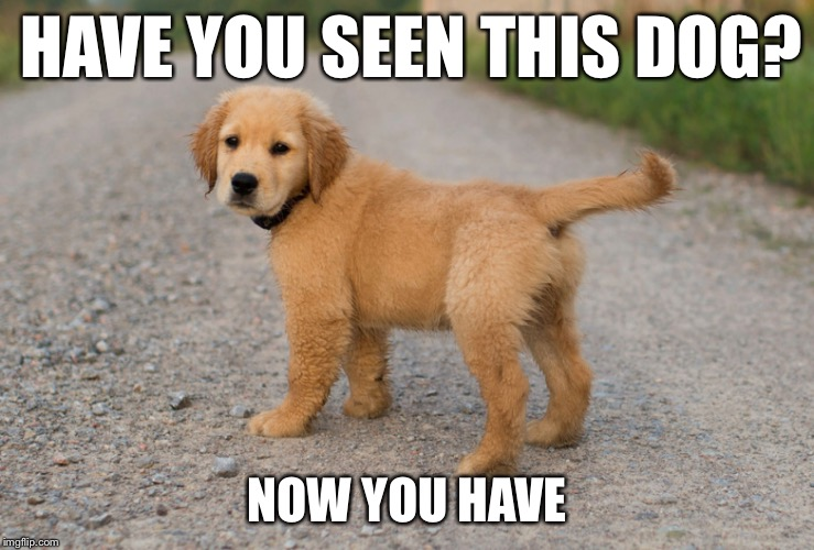 Now u hav |  HAVE YOU SEEN THIS DOG? NOW YOU HAVE | image tagged in doggo,cute puppy | made w/ Imgflip meme maker
