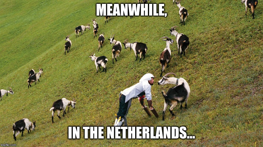 Neterlands | MEANWHILE, IN THE NETHERLANDS... | image tagged in netherlands,europe,europa,weirdness,terrifying goatman | made w/ Imgflip meme maker