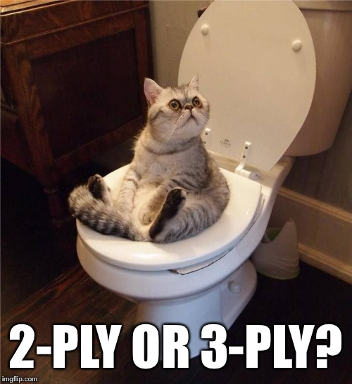 Which one do you use / prefer? | 2-PLY OR 3-PLY? | image tagged in memes,cats,toilet | made w/ Imgflip meme maker