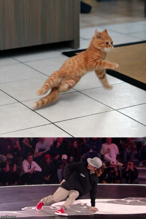 BREAK DANCE CAT | image tagged in cats,cat,break dancing | made w/ Imgflip meme maker