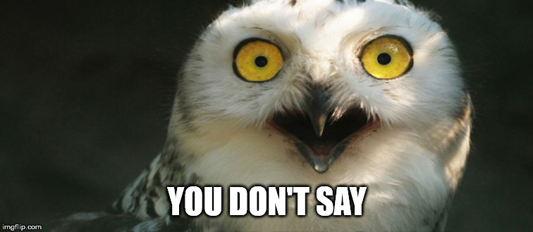You don't say owl | YOU DON'T SAY | image tagged in you don't say,meme | made w/ Imgflip meme maker