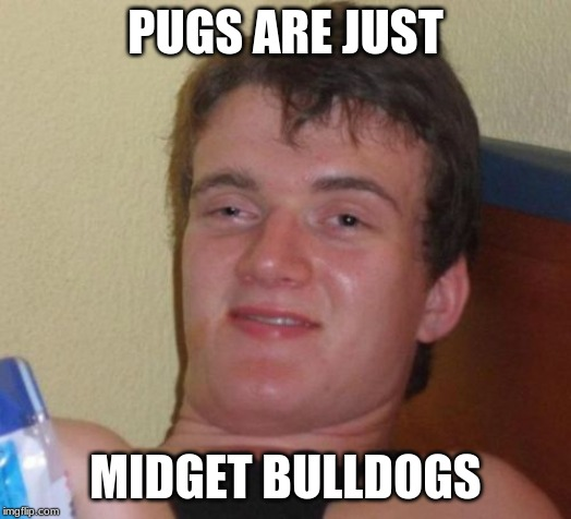 Or are they slightly the same size? (DISCLAIMER: Not intended to offend anybody who suffer from dwarfism.) | PUGS ARE JUST MIDGET BULLDOGS | image tagged in memes,10 guy,pugs,dogs,pets | made w/ Imgflip meme maker