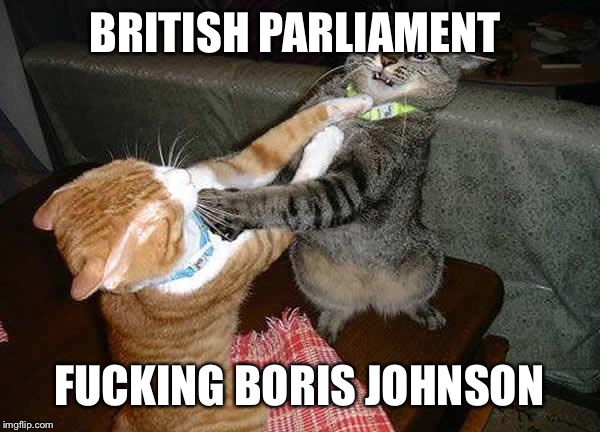 Two cats fighting for real | BRITISH PARLIAMENT F**KING BORIS JOHNSON | image tagged in two cats fighting for real | made w/ Imgflip meme maker