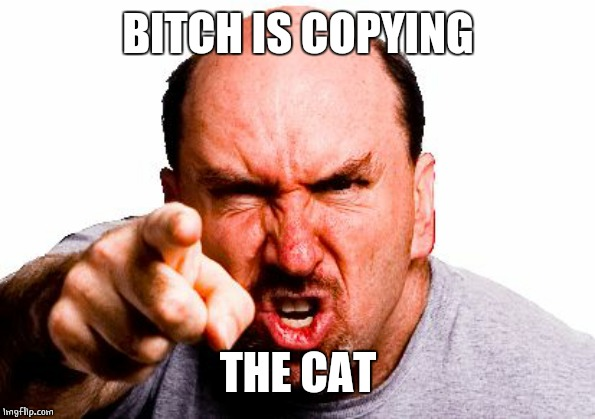 angry man | B**CH IS COPYING THE CAT | image tagged in angry man | made w/ Imgflip meme maker