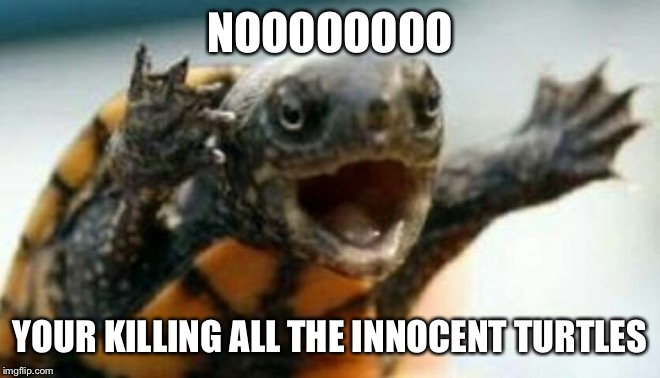 Turtle Say What? | NOOOOOOOO YOUR KILLING ALL THE INNOCENT TURTLES | image tagged in turtle say what | made w/ Imgflip meme maker